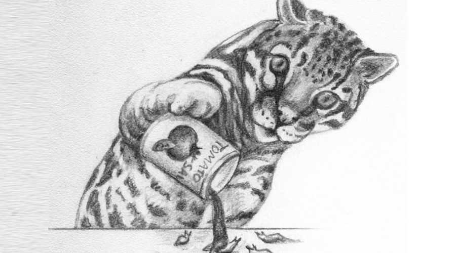 If I Were an Ocelot by Renee LaTulippe