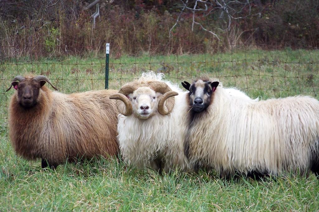 NaRae, ReRa, and Nora