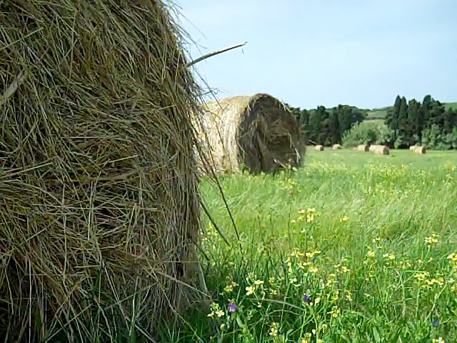 Big round bales of hay