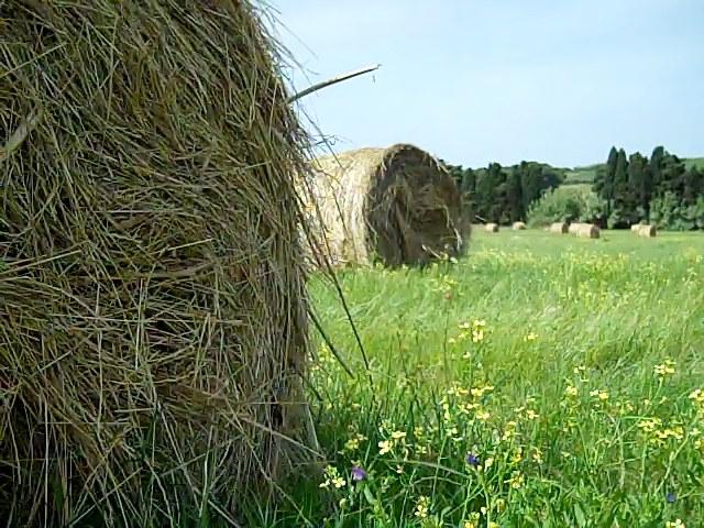 Big round bales of hay
