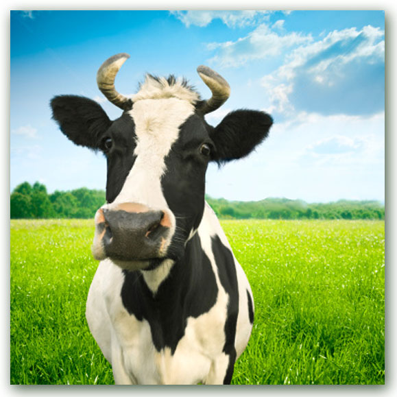 """Poetry Monday Kids' Classics: """"The Moo-Cow-Moo"""" by Edmund ..."""