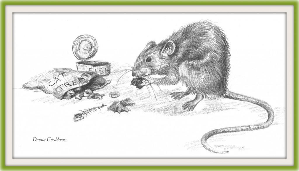 Rat eating cat treats