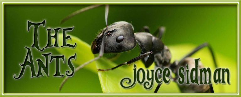 """The Ants"" by Joyce Sidman"