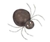 mm-spider