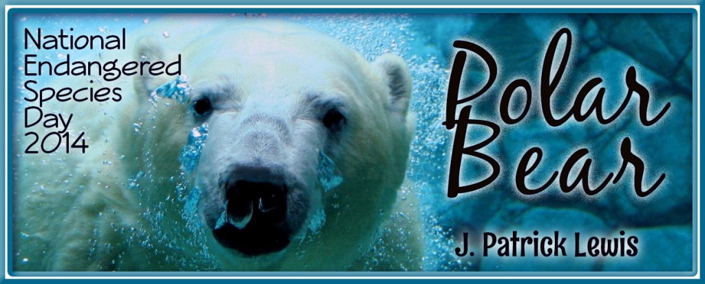 polar-bear-featured