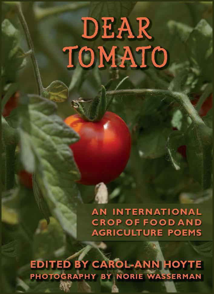 DEAR-TOMATO-cover