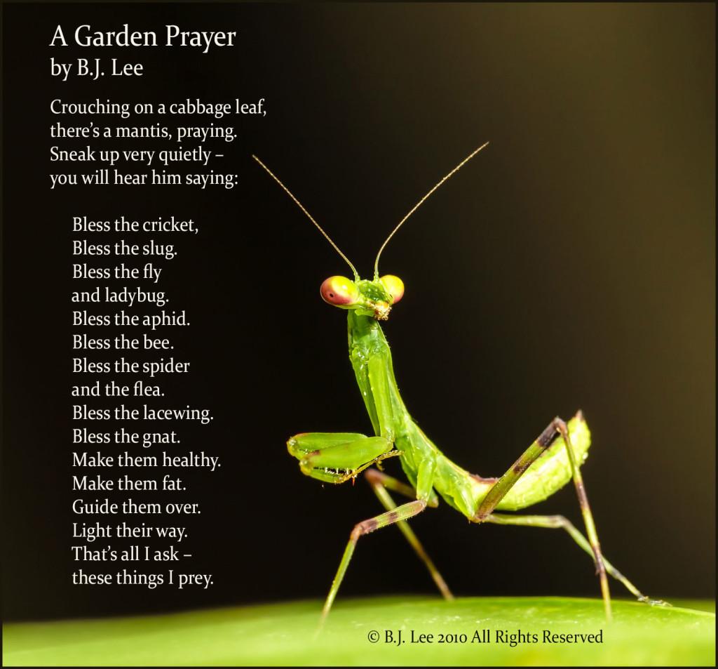 praying-mantis-poe