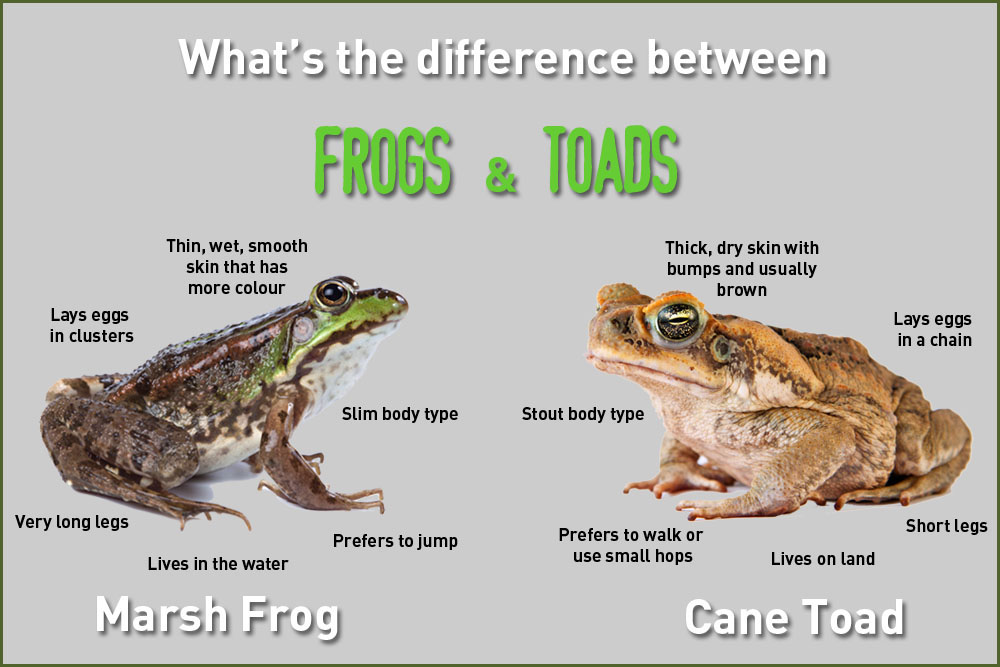 difference-frogs_and_toads
