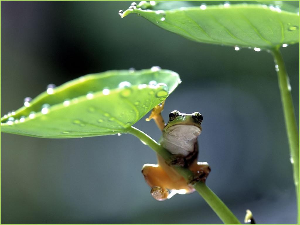frog-on-a-leaf