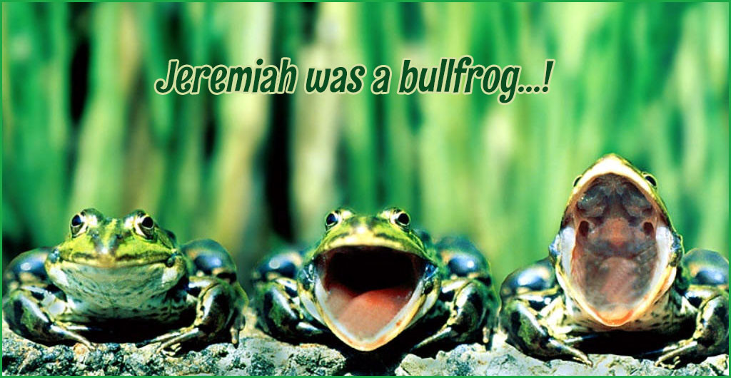 funny-frogs