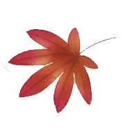 MAPLE-LEAF-SMALL-ILLO