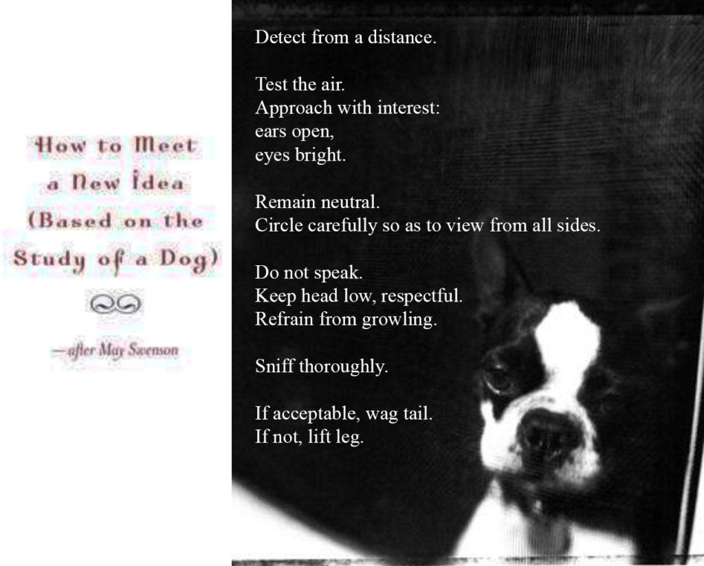 3k-dog-idea