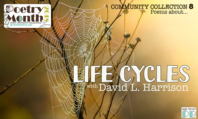 Community Collection 8 Life Cycles With David L Harrison Renee